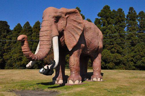アフリカンサファリの象.jpg