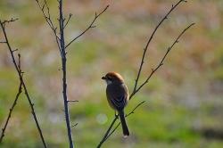 3月5日野鳥探し2.jpg