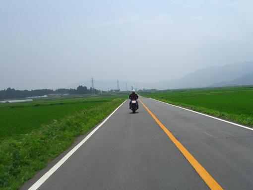 コスモスロード(熊本).jpg
