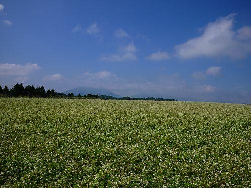 阿蘇の蕎麦畑.jpg