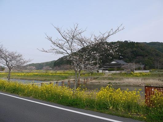 P1100347.jpg